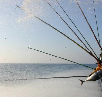 Arrantzales de bonito del norte, pesca sostenible.